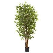 Black Olive Silk Tree