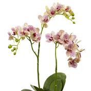 Raspberry Orchid Elegance Arrangement