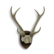 Mounted Deer Antlers and Partial Skull Hanging Decorative Trophy Statue