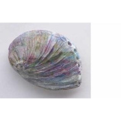 Painted ~ Abalone Shell ~ Refrigerator Magnet ~ AP160M