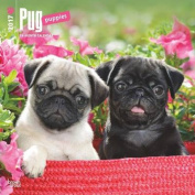 Pug Puppies 2017 Square