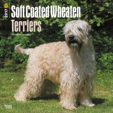 Wheaten Terriers, Soft Coated 2017 Square
