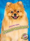 Pomeranians (Awesome Dogs)