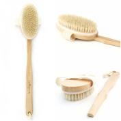 Premium Body Scrubbing Brush 2-in-1 - Long-Handled Exfoliating Body Brush - Convenient Detachable Handle - Fantastic Massager - Ideal for Skin & Cellulite Exfoliation - All Natural Boar Bristles