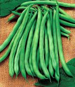 Blue Lake Bush Bean - 400+ Seeds, 120ml - VALUE PACK!