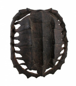 Dark Brown Faux Antiqued Turtle Shell Wall Mounted Sculpture