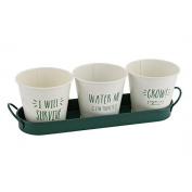 Vegetable Patch 3 x mini planters with tray