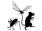 Mouse Dragonfly Cricket 7.6cm - 0.6cm - Black 16CC610 Fused Glass Decal