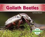 Goliath Beetles