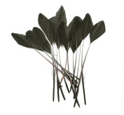Hgshow goose feather,Stripped Coque Feathers, Pack of 40, MANY colour OPTIONS - by Lamplight Feather