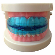 Top Selling Dental Tooth Orthodontic Appliance Trainer Alignment Braces