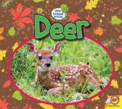 Deer (Little Backyard Animals)
