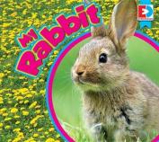 My Rabbit (Eyediscover)