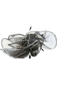 Womens Vibrant Formal Fascinator