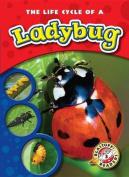 The Life Cycle of a Ladybug