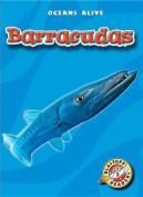 Barracudas (Oceans Alive)