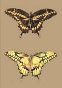 Carnet Blanc, Papillons Cresphontes  [FRE]