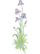 Iris Stencil - (size 17cm w x 50cm h) Reusable Wall Stencils for Painting - Best Quality Wall Border Flower Stencil Ideas - Use on Walls, Floors, Fabrics, Glass, Wood, Terracotta, and More...