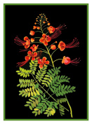 Pride of Barbados Peacock Flowers by Mary Delany Counted Cross Stitch