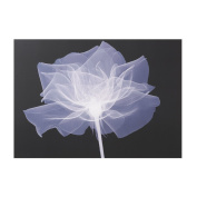 Graham & Brown X-Ray Rose Floral Black/White Canvas Wall Art Was £25 Now £5