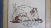 Siamese with Kitten Counted Cross Stitch Kit 7872