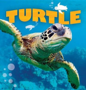 Turtle (Wild Planet)