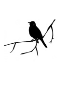 Pack of 3 Bird On Branch Stencils Made from 4 Ply Mat Board 11x14, 8x10, 5x7