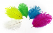 ALL in ONE 10pcs 6-8inch(15-20cm) Natural Ostrich Feathers for DIY Home Party Wedding Decorations