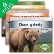 Animales de América del Norte (Animals of North America) (Set) (Animales de America del Norte  [Spanish]
