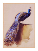 Peacock by Archibald Thorburn Bird Counted Cross Stitch Pattern