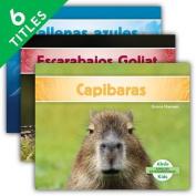Especies Extraordinarias (Super Species) (Set) (Especies Extraordinarias  [Spanish]