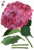 Brewster Plage PL160829 Peel & Stick Constentia Hydrangea European Wall Decals