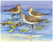 Magic Slice Non-Slip Flexible Gourmet 30cm x 38cm Sandpipers Cutting Board by Kathleen Parr McKenna, Multicolor
