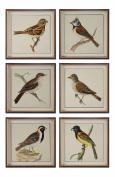 Spring Soldiers Bird Prints, S/6