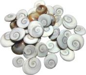 Shraddha Shree Gems Original Energised Gomti Chakra (21 Chakras) .