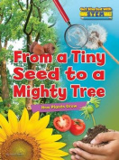 From a Tiny Seed to a Mighty Tree