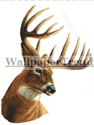 10cm Whitetail Buck Deer Head 12 Point Antlers Hunting Removable Peel Self Stick Wall Decal Sticker Art Hunt Hunter Rustic Lodge Cabin Outdoor Wildlife Nature Home Decor 7.6cm wide by 10cm tall