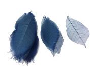 Dark Blue Skeleton Small Leaves 7.6cm Natural Colour Flower Making Natural Rubber Leaves