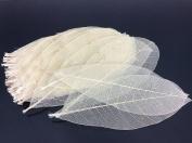 Skeleton Leaves 15cm 300 pcs Natural Rubber Leaves Flower Making Floral Scrapbook Craft Wedding Card