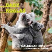 Baby Koalas Calendar 2017