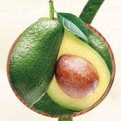 Avocado oil - 100% Pure and Natural Extracted by Cold pressing process No artificial / synthetic fragrance, flavour or preservative