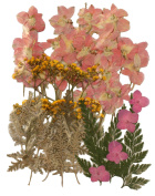 Pressed flowers, larkspur, baby breath, hydrangea, foliage mixed pack for art craft, scrapbooking, card making