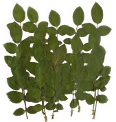 Pressed rose leaves 20pcs