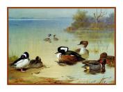 BOGO SALE-Ducks Seaside by Archibald Thorburn Bird Counted Cross Stitch Pattern