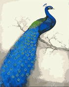 Arts Language Wooden Framed 41cm x 50cm Paint by Numbers Diy Painting Blue Peacock