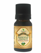 EUCALYPTUS ESSENTIAL OIL10 ML Organic Therapeutic Grade A 100% Pure Undiluted Steam Distilled Natural Aroma Premium Quality Aromatherapy diffuser Skin Hair Body Massage By CocoJojo