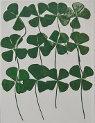 HANDI-KAFU Four Leaf Clover with branch real pressed dried flowers