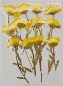 HANDI-KAFU yellow Daisy with branch real pressed dried flowers