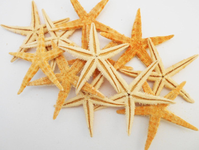 "50 Large Size Starfish - Philippine Tan Flat Sea Stars (2"" - 3"" / 50 - 75 mm) Beach Crafts Wedding Invitations"