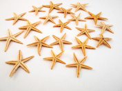 "50 Medium Size Starfish - Philippine Tan Flat Sea Stars (1 1/2"" / 35 - 50 mm) Beach Crafts Wedding Invitations"